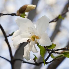 [zs110] 봄의 화단 #3