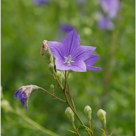 [5D Mark IV] 꽃 사진 몇 장