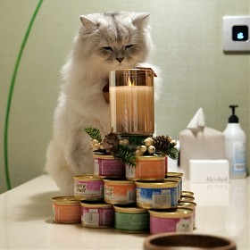 [S5] 고양이 생일~