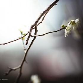 [A99II + 135.8] 봄소식..