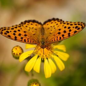 [A7M3] 오랜만에 나비를
