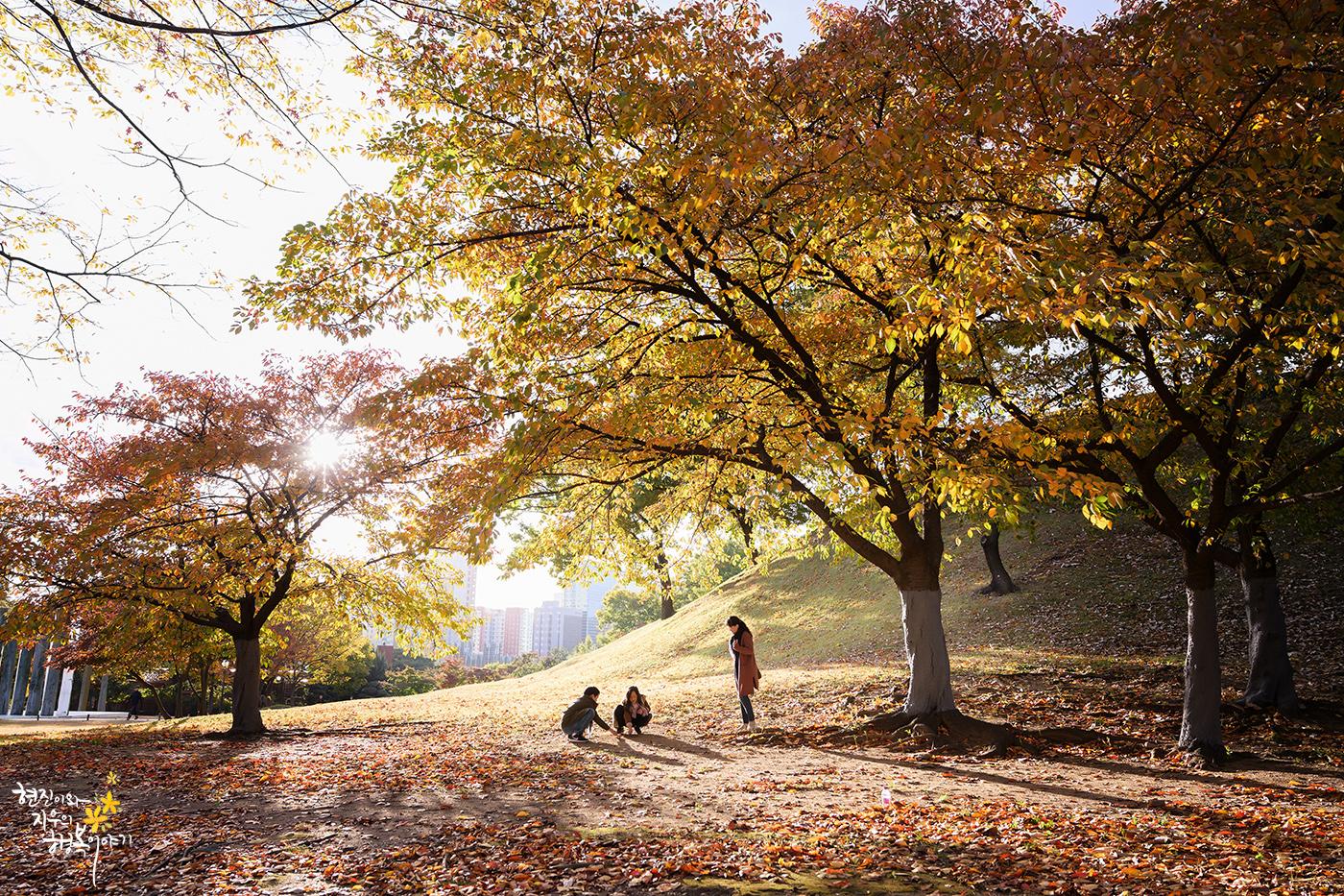 [Z7] 낙엽전쟁