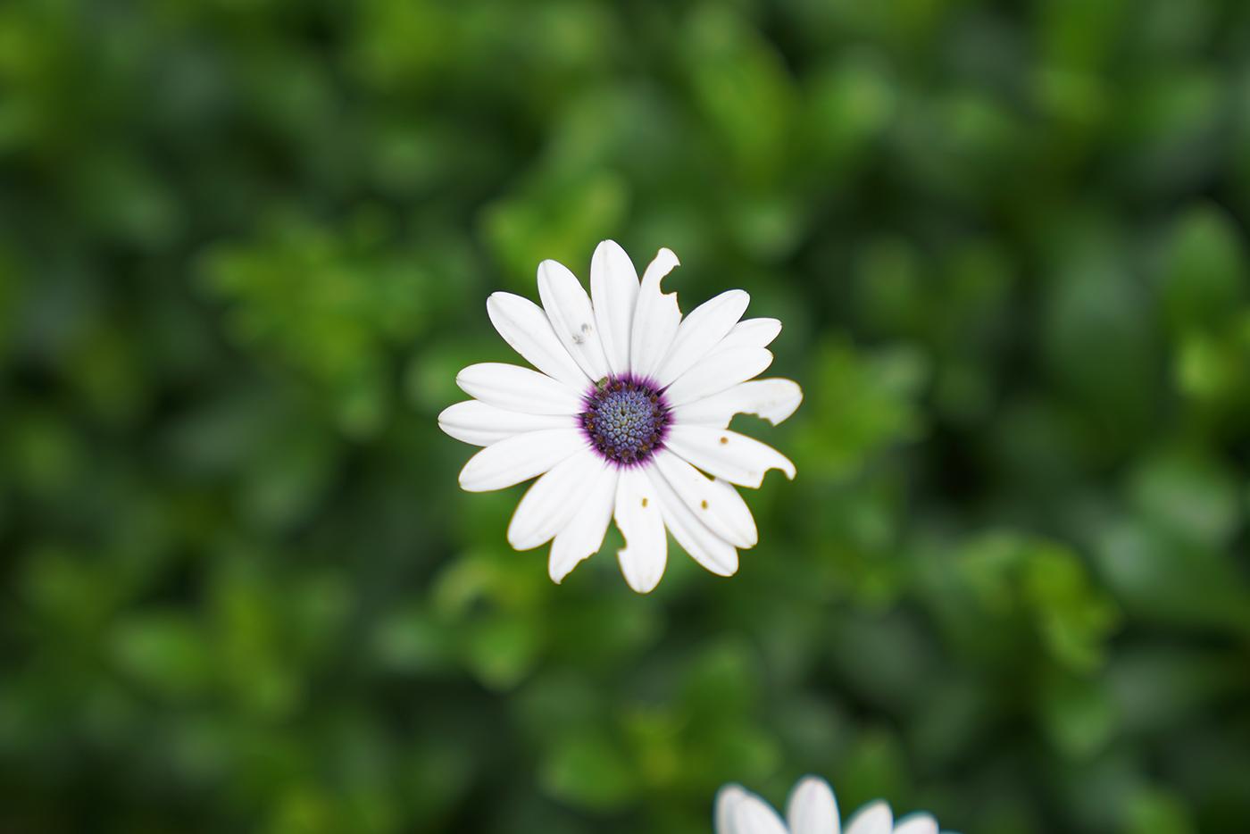 [ A9 ] A9의 Auto WB로 촬영한 무보정 리사이즈 원본 꽃 사진입니다.^^