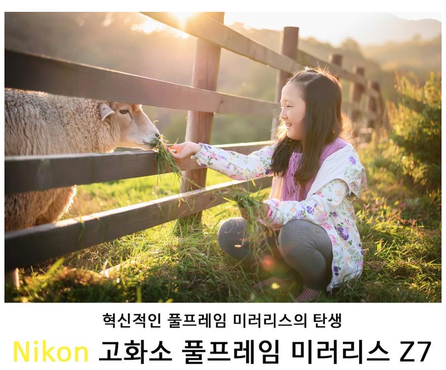 [Nikon Z7 리뷰 3] 사진에 집중할 수 있는 카메라 Nikon Z7